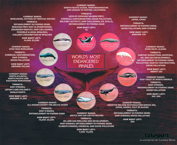 TakePart Whale Graphic
